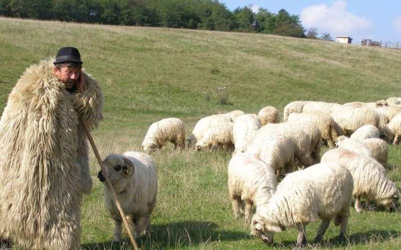Ciobanii din Sibiu spun că zerul fiziologic e mai eficient decât vaccinul Pfizer