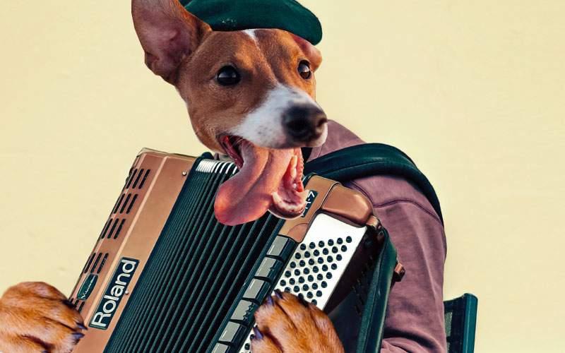 A fost omologat ciobănescul de Ferentari, câinele care poate să cânte la acordeon