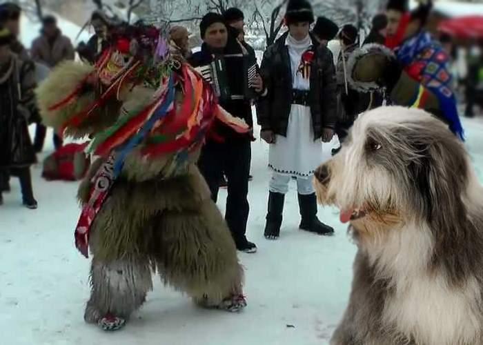 """Un cioban explică de ce are nevoie de câini: """"Nu ştii niciodată când vin colindătorii!"""""""