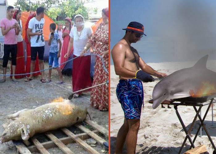 Țiganii care au tăiat porcul în Mamaia, detronați! Un cocalar a pârlit un delfin direct pe plajă