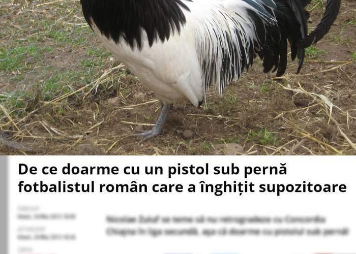 Veşti bune în cazul cocoşului care a trăit un an fără cap! Acum scrie titluri la sport.ro