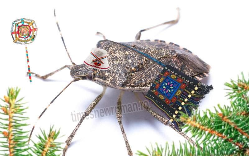 Alertă! Gândacul puturos a suferit o mutaţie şi dacă îl striveşti cântă colinde