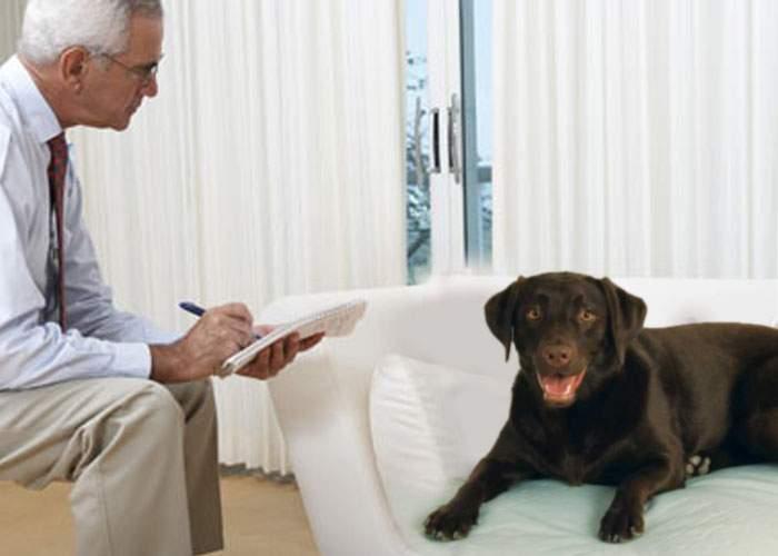 Gata cu câinii agresivi! Fiecare maidanez va beneficia de consiliere psihologică, promite Primăria