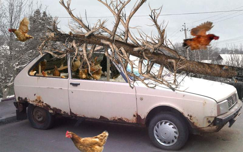 Tragedie. Un copac prăbuşit peste un Oltcit a ucis 25 de găini