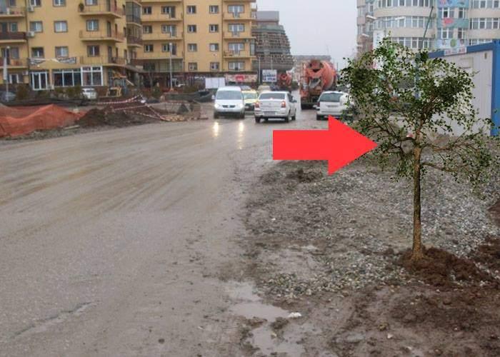 Primăvară spectaculoasă în cartierul Militari. Singurul copac a înverzit!