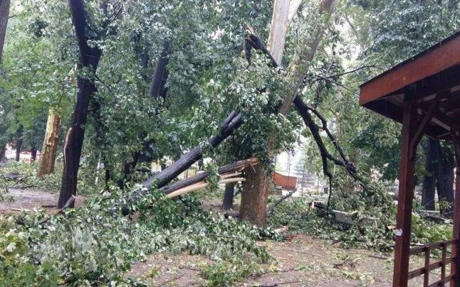 Mai mulți copaci din Parcul Central din Cluj au căzut la pământ, de la greutatea fanilor Untold cazați acolo