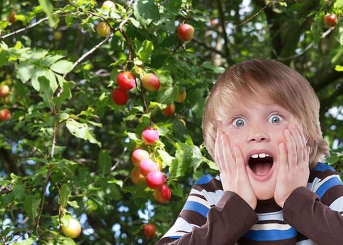 Copii de oraş! Un puşti a văzut prima oară corcoduşe în pom şi a crezut că sunt tot decoraţii puse de Firea