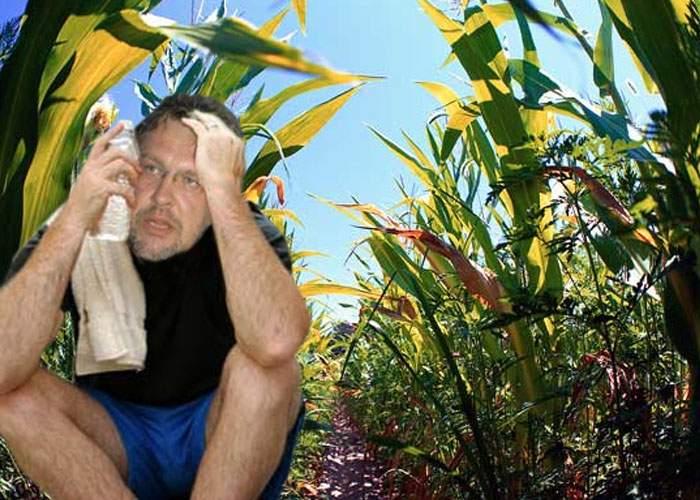 Gabriel Cotabiţă a fost chemat să transpire în lanurile de porumb afectate de secetă