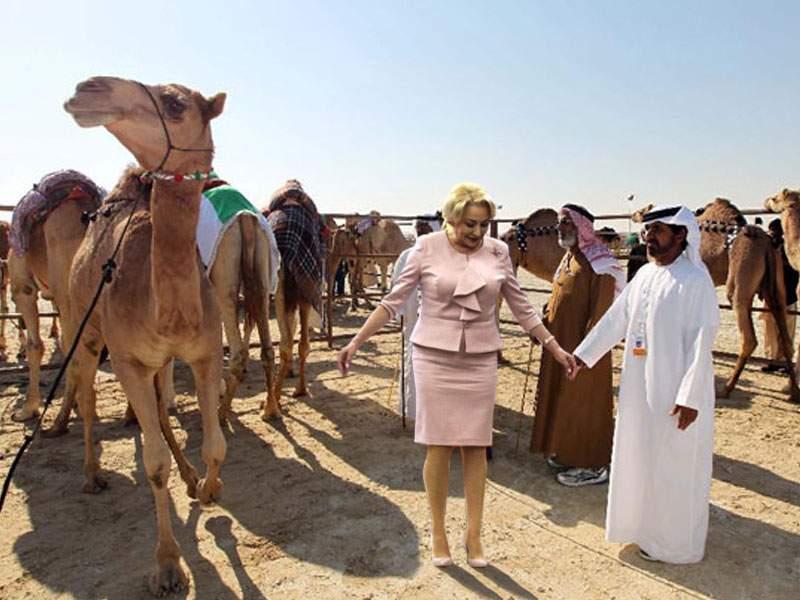 Ofertă tentantă. Un şeic arab ne oferă două cămile pentru Viorica Dăncilă!