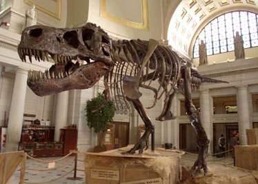 """Paleontologii ruşi au organizat un simpozion pe tema """"De ce a dispărut tezaurul?"""""""