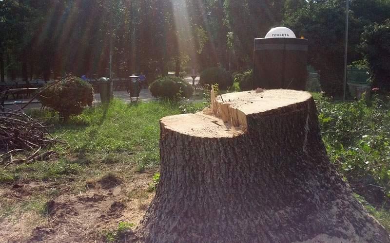 """Gabi Firea a aprobat mitingul din 10 august şi va defrişa parcul Kiseleff """"ca să fie loc"""""""