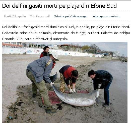 Doi delfini şi-au lăsat cadavrele pe plajă şi s-au aruncat în apă