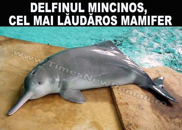 Delfinul mincinos, o nouă specie de delfin la Marea Neagră