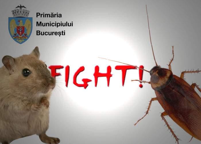 Începe războiul în Bucureşti: gândacii au câştigat licitaţia pentru deratizare şi şobolanii pentru dezinsecţie