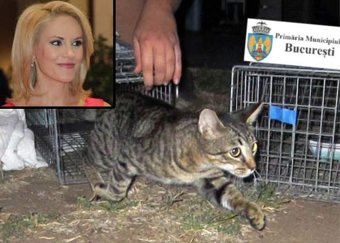 Începe deratizarea în Bucureşti! Primăria a cumpărat cu 9 milioane de euro o pisică şi îi va da drumul pe stradă