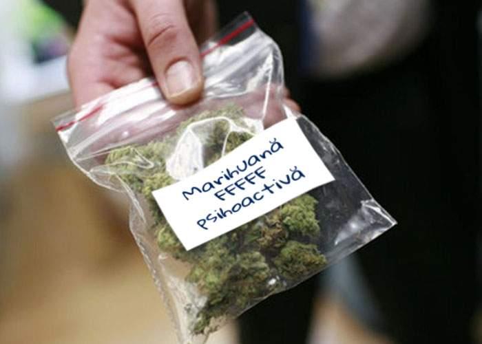Descinderi DIICOT! Au fost premiaţi traficanţii de marijuana care nu furau la cântar