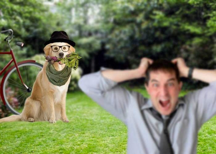 Cel mai periculos câine e Dogul Vegan, care nu te muşcă, dar te exasperează cu sfaturi de lifestyle