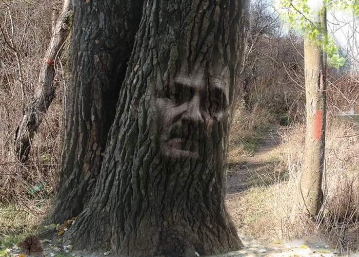 Miracol la Teleorman: Chipul lui Liviu Dragnea s-a arătat într-un trunchi de copac