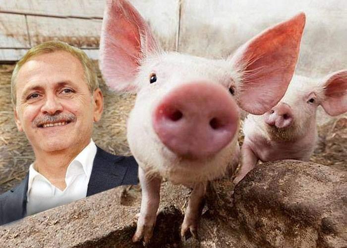 10 lucruri despre ferma de porci a lui Liviu Dragnea
