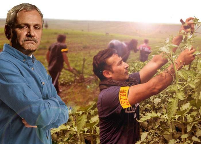 Proiect nou PSD! Protestatarii anti-Guvern vor fi condamnați la muncă silnică pe moșia lui Dragnea