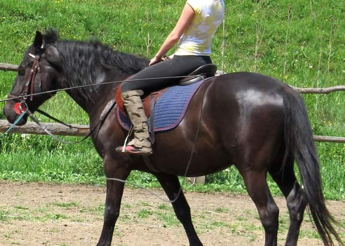 O firmă din România oferă britanicilor cursuri de echitaţie, iar la final calul poate fi mâncat