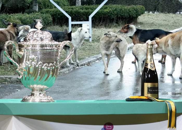 Lux! O pensionară a organizat în faţa blocului prima Expoziţie Internaţională de câini rasa maidanez