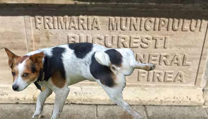 Fântânile inaugurate de Firea, vizitate de mii de bucureşteni, care duc căţeii să se pişe pe placa cu numele ei