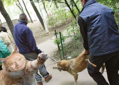 Un motan cunoscut de vecini ca Felix a turnat maidanezii de la bloc la Serviciul de Ecarisaj