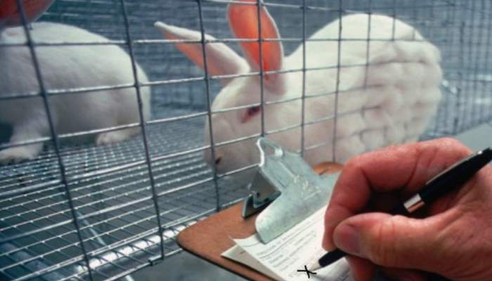 Caracal. Ferma de iepuri din localitate a pierdut şi anul ăsta contractul pentru ouă de Paşti