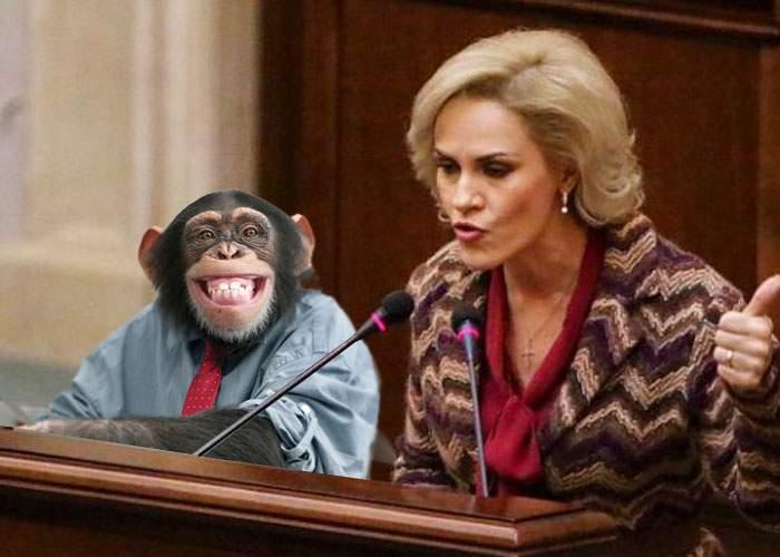 Firea schimbă conducerea Circului Globus! Noul şef va fi maimuţa Cici, membru cu state vechi în PSD