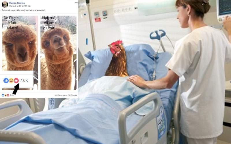 Iulia Albu și-a bătut găina, furioasă că nu e la fel de virală ca alpaca lui Godină
