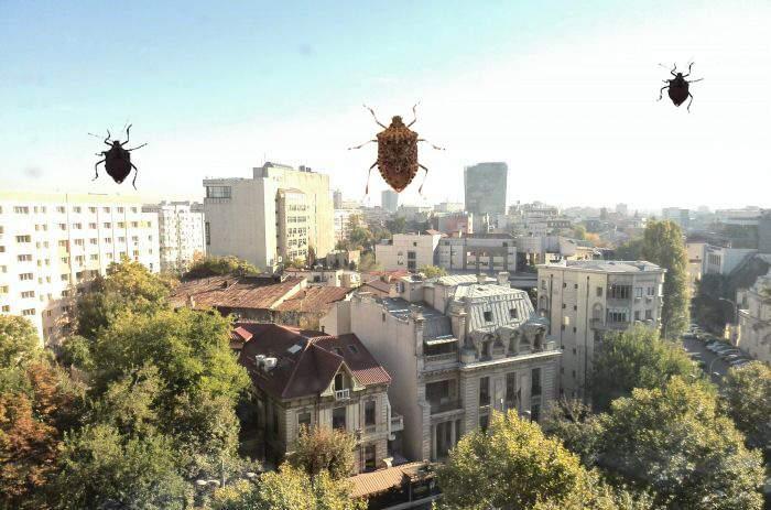 Mii de bucureşteni, convinşi că soluţia împotriva invaziei de gândaci puturoşi e să pută ei mai tare
