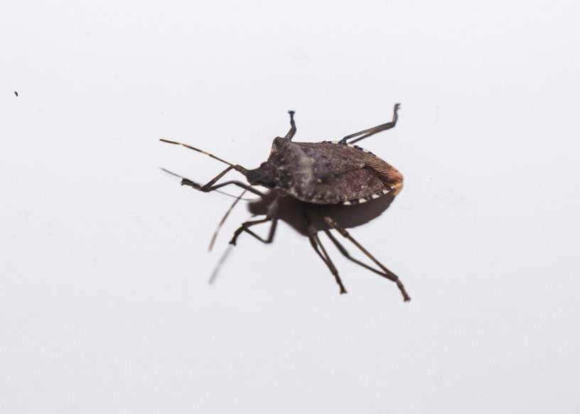 Tot mai mulţi români îşi dau foc la case ca să scape de gândacii puturoşi
