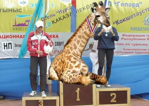 O girafă, medaliată cu aur în proba de înghiţit săbii