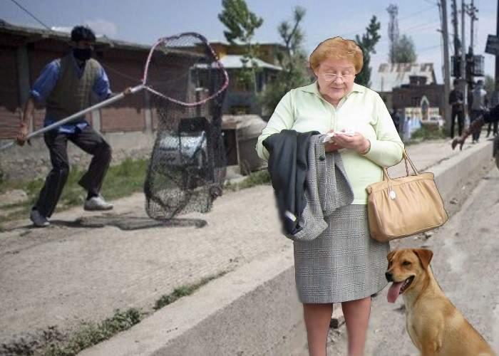 Pensionarii care hrănesc câini fără stăpân vor fi strânşi în adăposturi la marginea oraşului