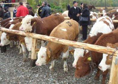 Guvernul va transforma iarmarocurile în târguri de joburi pentru animale