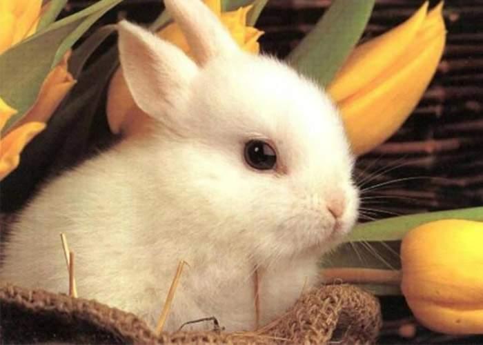 Evenimentele anului 2012 – Aprilie: Armonie primăvăratică cu păcăleli şi ouă roşii