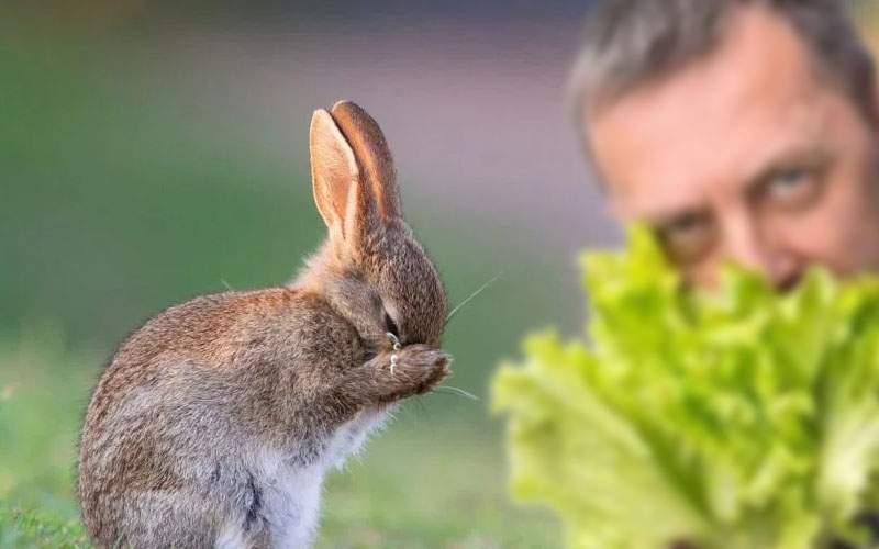 Cruzime! Un iepuraş a izbucnit în lacrimi când a văzut un vegan care îi mânca salata