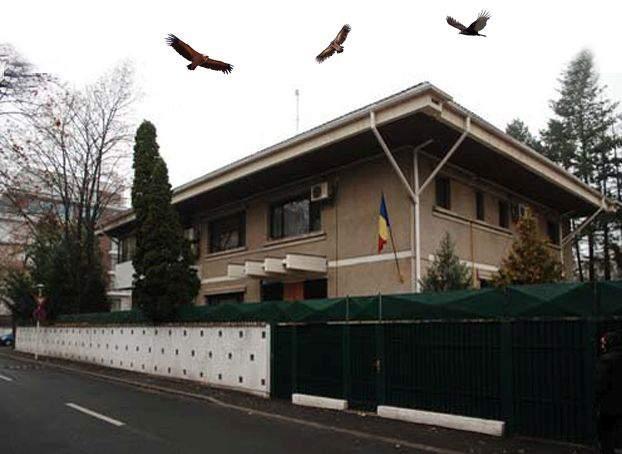 Semne bune în Primăverii! Mai mulți vulturi se învârt în cerc deasupra vilei lui Ion Iliescu