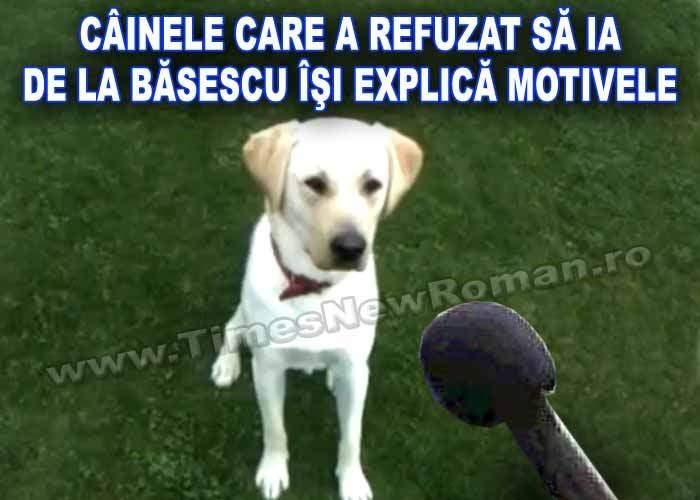 Exclusiv: câinele care n-a vrut să ia de la Băsescu își explică refuzul