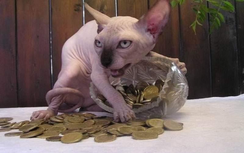 Victima celebrităţii! Au apărut primele poze cu pisica lui Karl Lagerfeld dezbrăcată