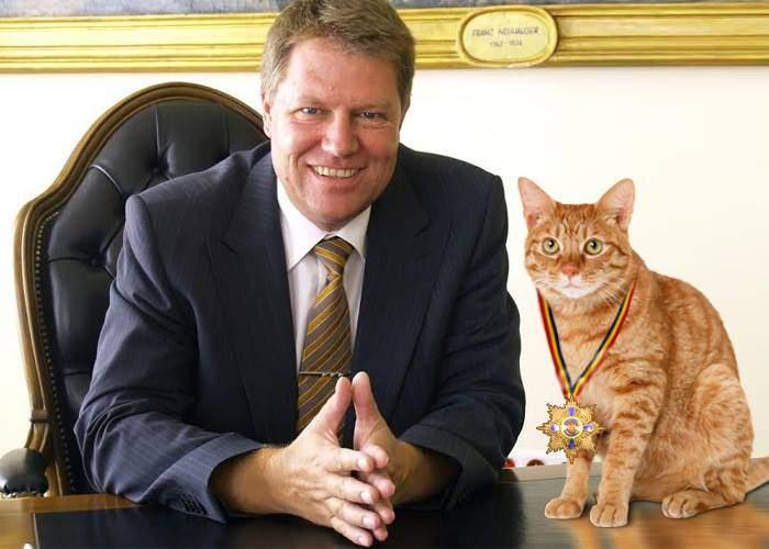 Disperat să redevină popular pe Facebook, Iohannis a scos artileria grea: a decorat o pisică
