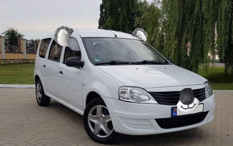 Umanitar! Românii și-au pus pe mașini urechi de koala ca să fie solidari cu australienii