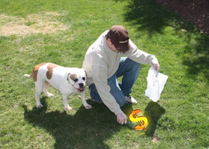Pentru a încuraja oamenii să strângă după câinii lor, statul va organiza Loteria Rahaţilor