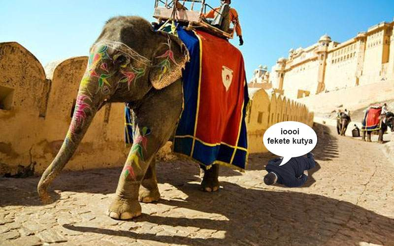 Represalii. Maharajahul de Sri Lanka l-a călcat cu elefantul pe singurul ungur din ţară