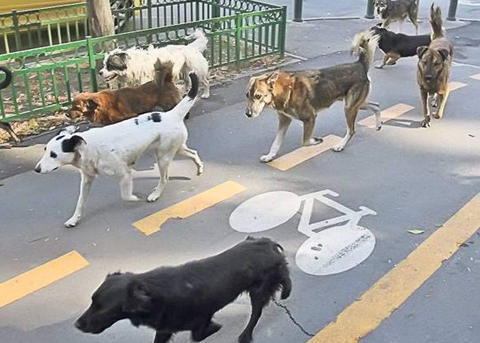 Zece soluţii la problema câinilor maidanezi