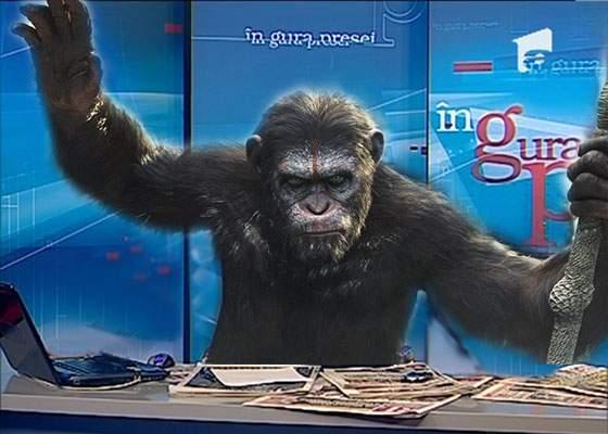 Zilele lui Mircea Badea sunt numărate: Savanții au dresat o maimuță să amenințe cu bătaia la TV