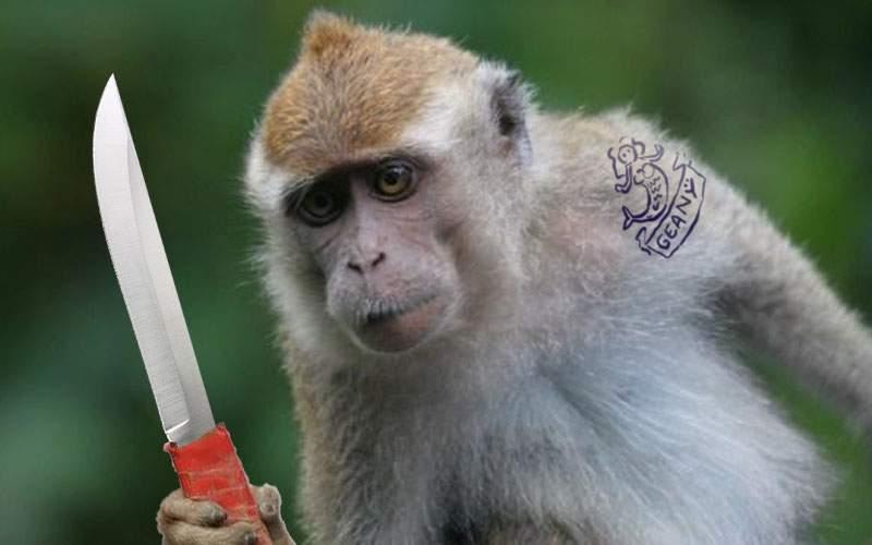 Maimuţa confiscată de la Nuţu a ajuns la Zoo şi face deja cămătărie cu banane