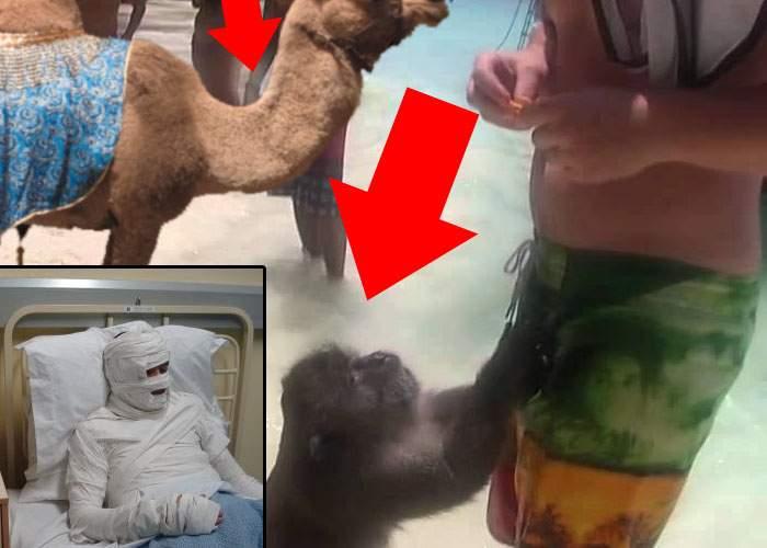 Un turist care nu s-a dus la munte de frica urşilor, atacat de maimuţă şi cămilă pe plajă la Mamaia