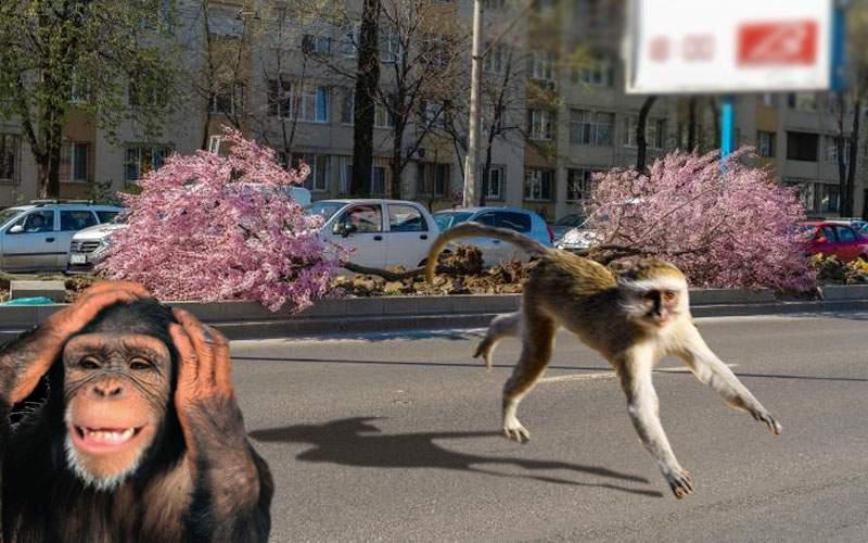 Nemilos! Primarul Mutu a distrus copacii de pe Iuliu Maniu, unde locuiau alegătorii lui